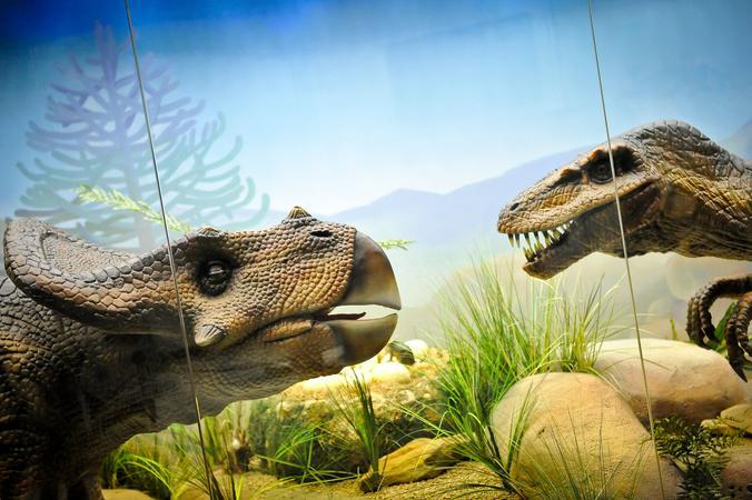 Танец динозавра и нападение на инопланетян: детей пригласили на занятия в Дарвиновский музей