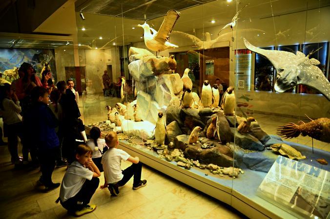 Сотрудники Дарвиновского музея расскажут об уникальном морском млекопитающем