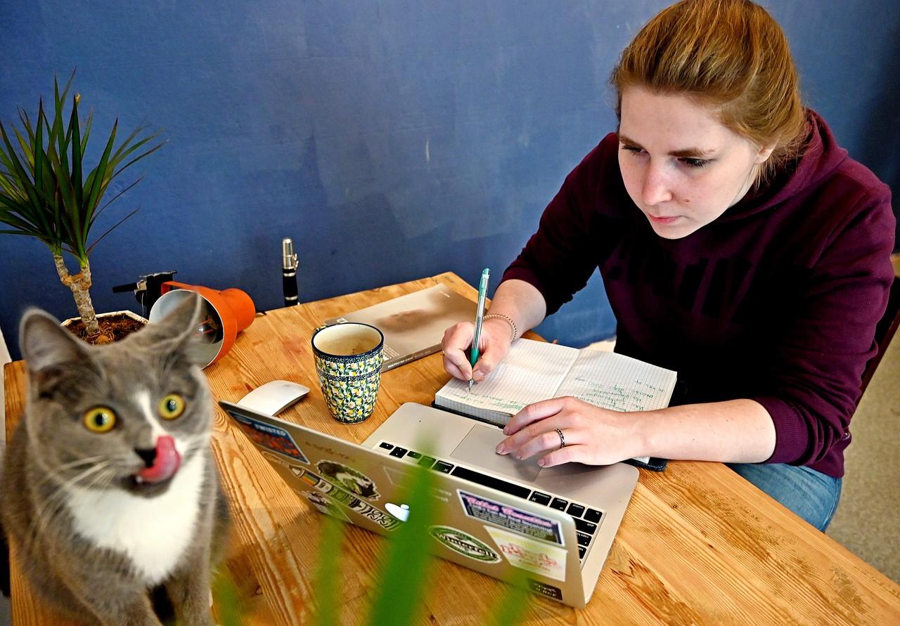 Сайт мэра Москвы поможет найти пропавшего кота