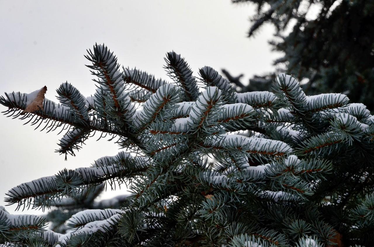 Морозная погода без осадков ожидается в Москве