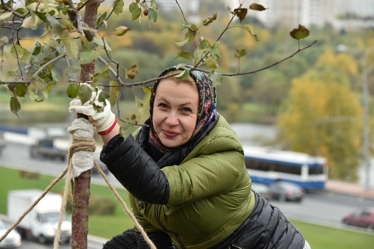 Около 800 тысяч деревьев высадили в Москве за девять лет. Фото: Владимир Новиков