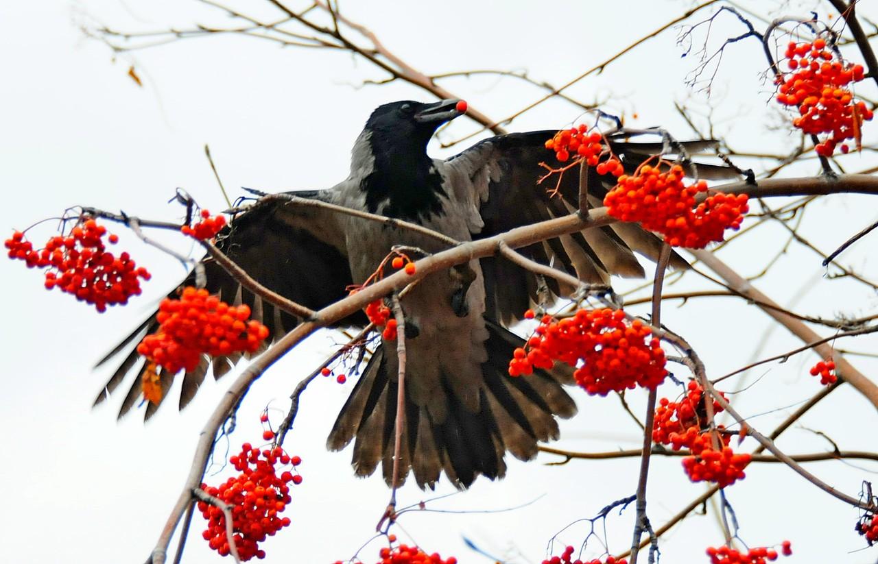 Учет животных по их следам начнут вести на зеленых территориях юга столицы