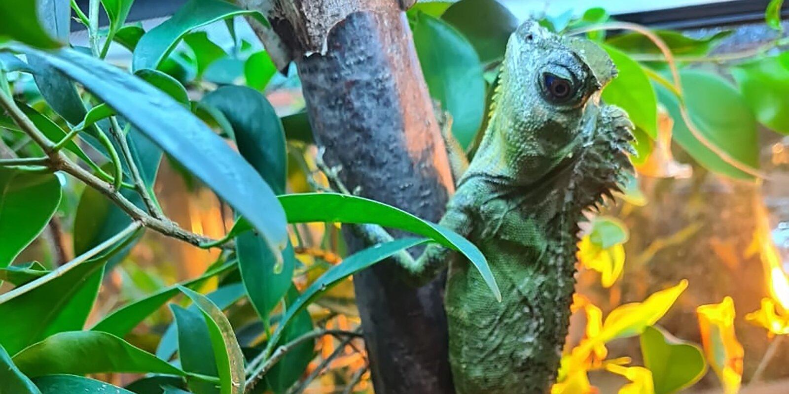 В зоопарке Москвы впервые вылупились лесные драконы