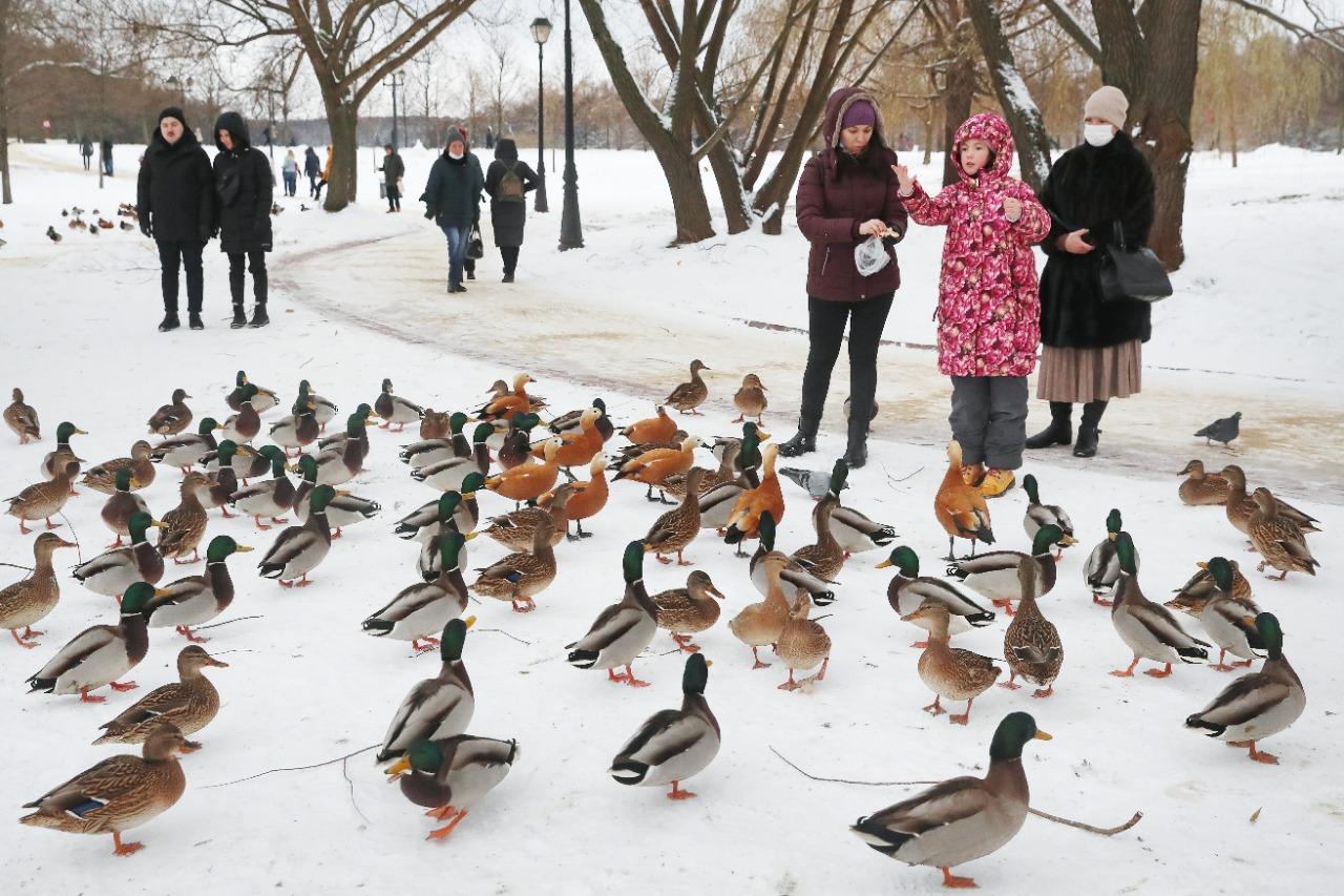 Фотофакт: покормите птиц