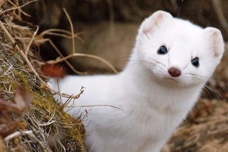 Ласки и ежи: москвичам рассказали о животных в парках юга