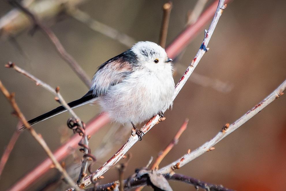 Специалисты рассказали о краснокнижных птицах на территории юга