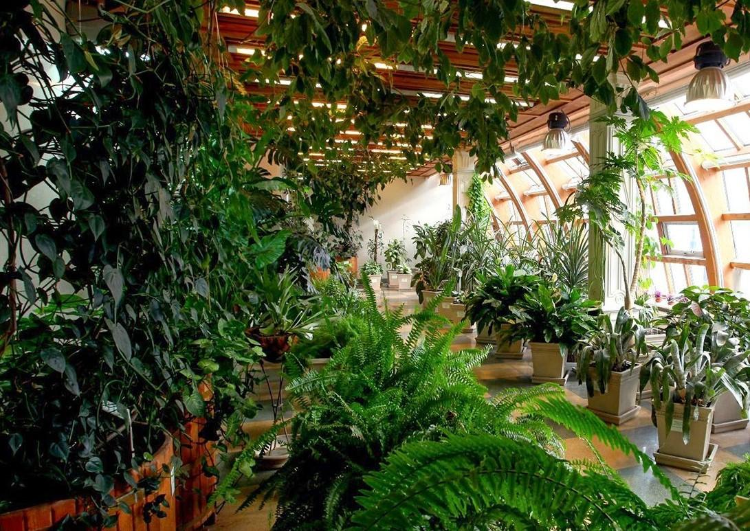 Мастер-класс по выращиванию пряных растений проведут онлайн в «Царицыне»