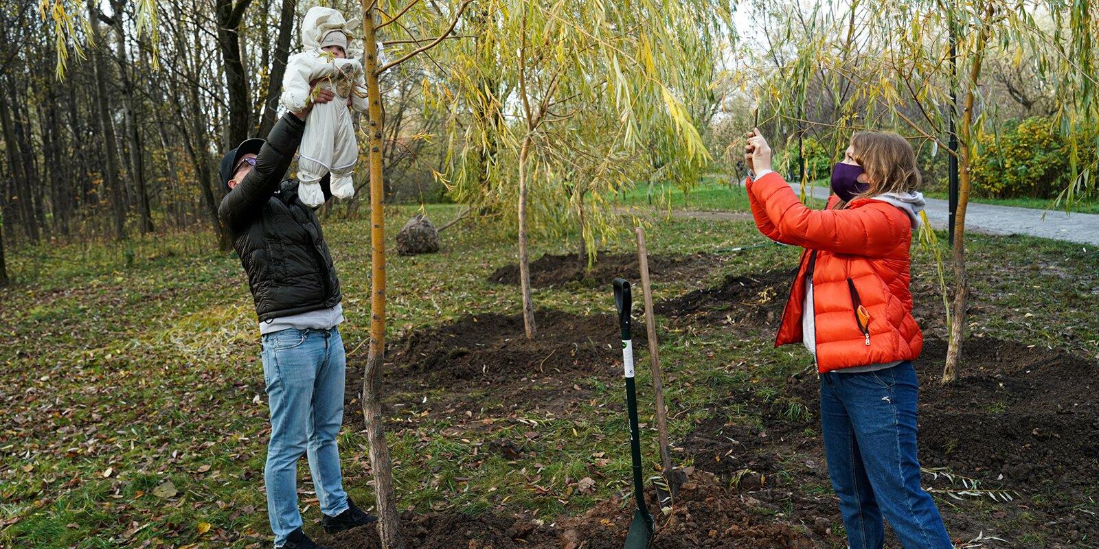 Свыше пяти тысяч именных деревьев высадили в московских парках