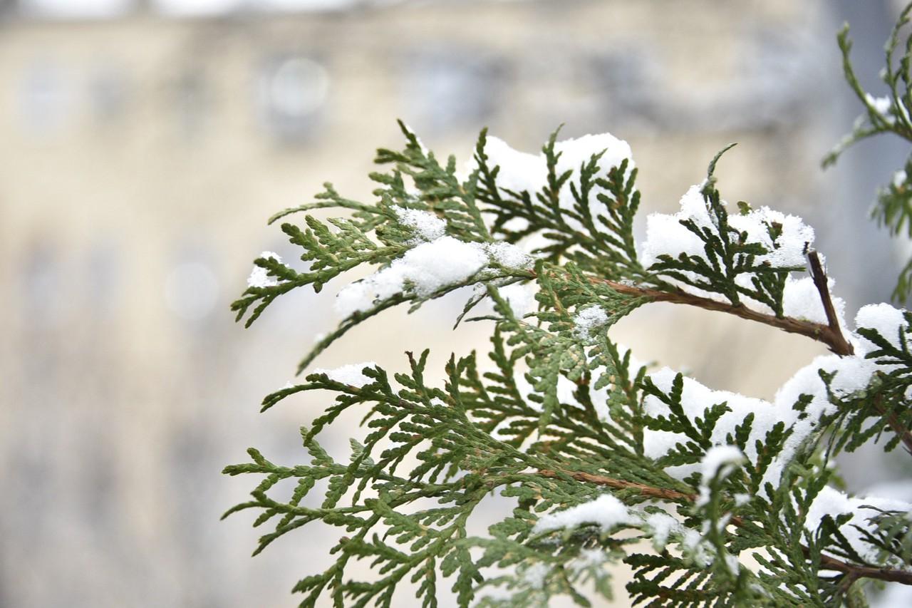Февраль может вернуть 30-градусный мороз в Москву