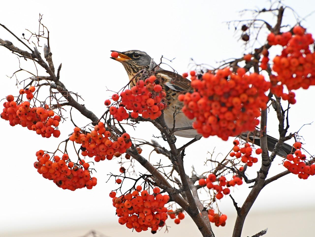День заповедников и национальных парков отметили в «Царицыне»