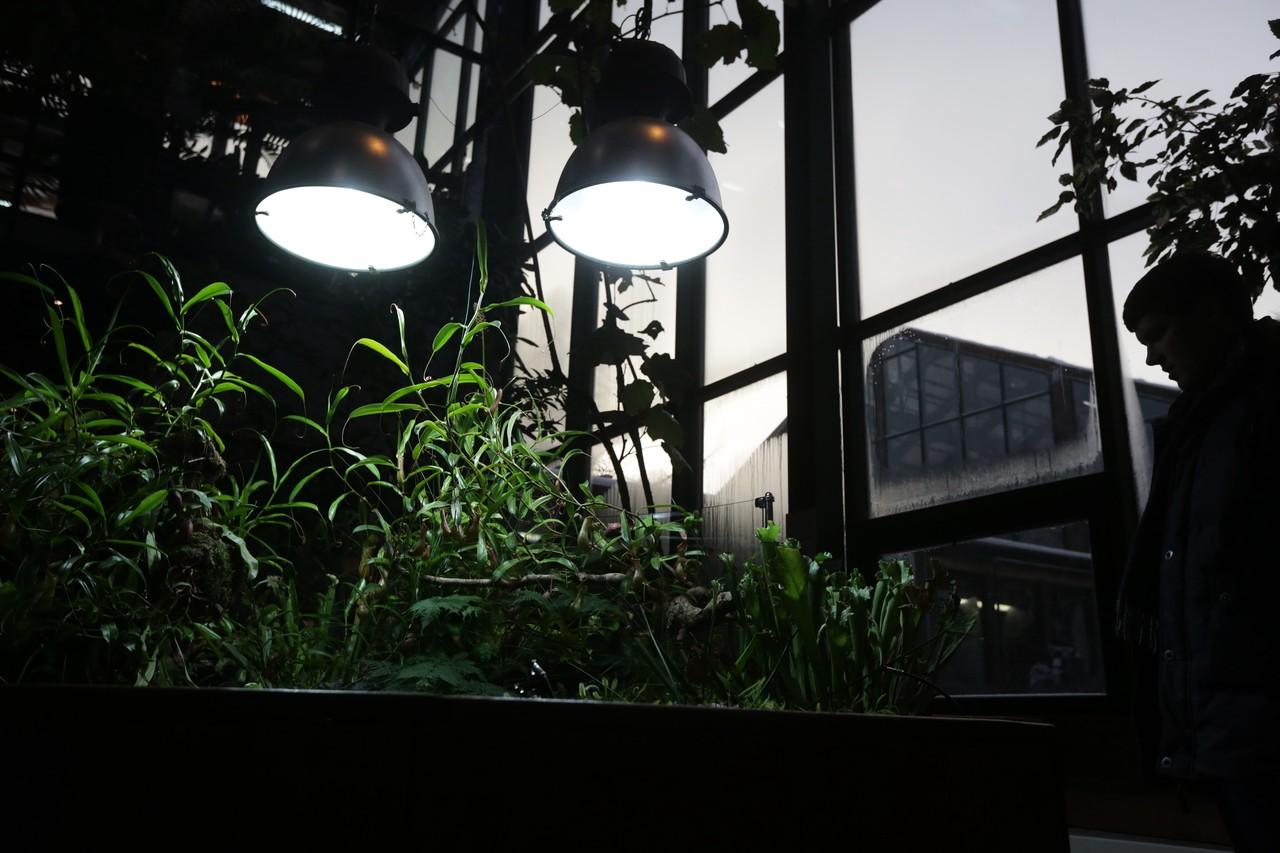 Рождественская орхидея расцвела в «Аптекарском огороде» Москвы