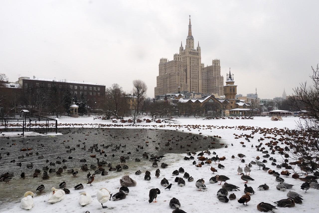 Фундамент для павильона «Ластоногие» готов в Московском зоопарке