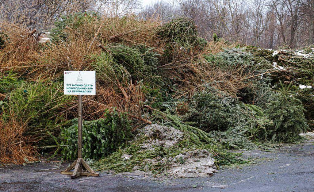 Свыше 70 пунктов сбора и переработки елок разместили в Южном округе. Фото предоставили сотрудники пресс-службы «Мосприроды»