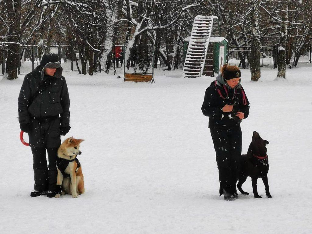 Необычные тренировки в «Сосенках». Фото предоставила народный корреспондент Лариса Пономарева