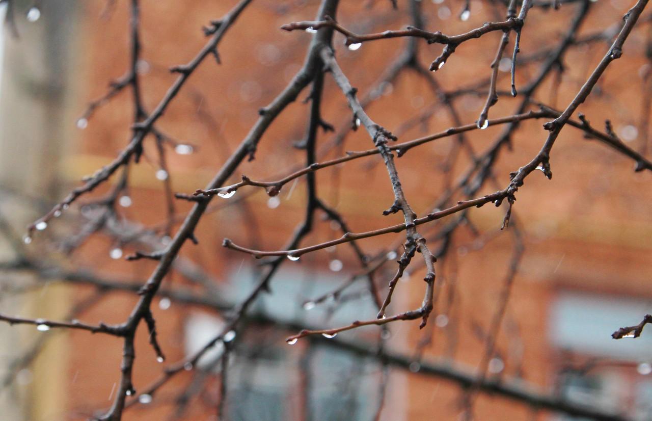 Ожидается до семи градусов выше нуля. Фото: Наталия Нечаева