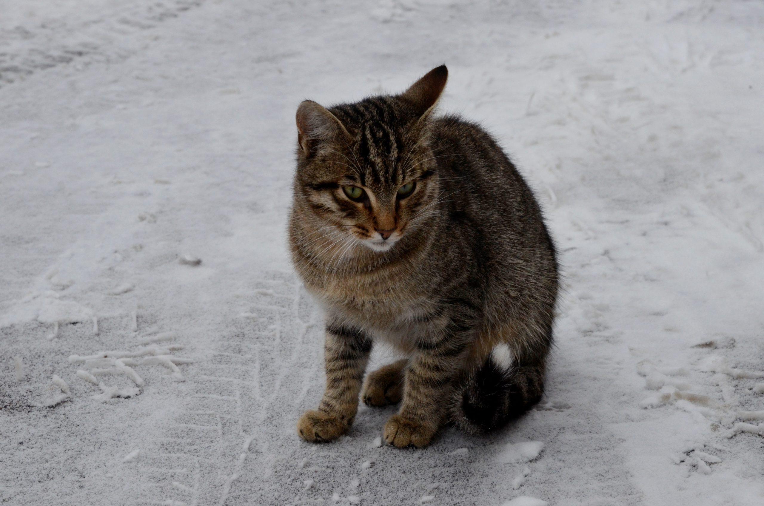 Проект для подсчета бездомных котов запустили в Москве