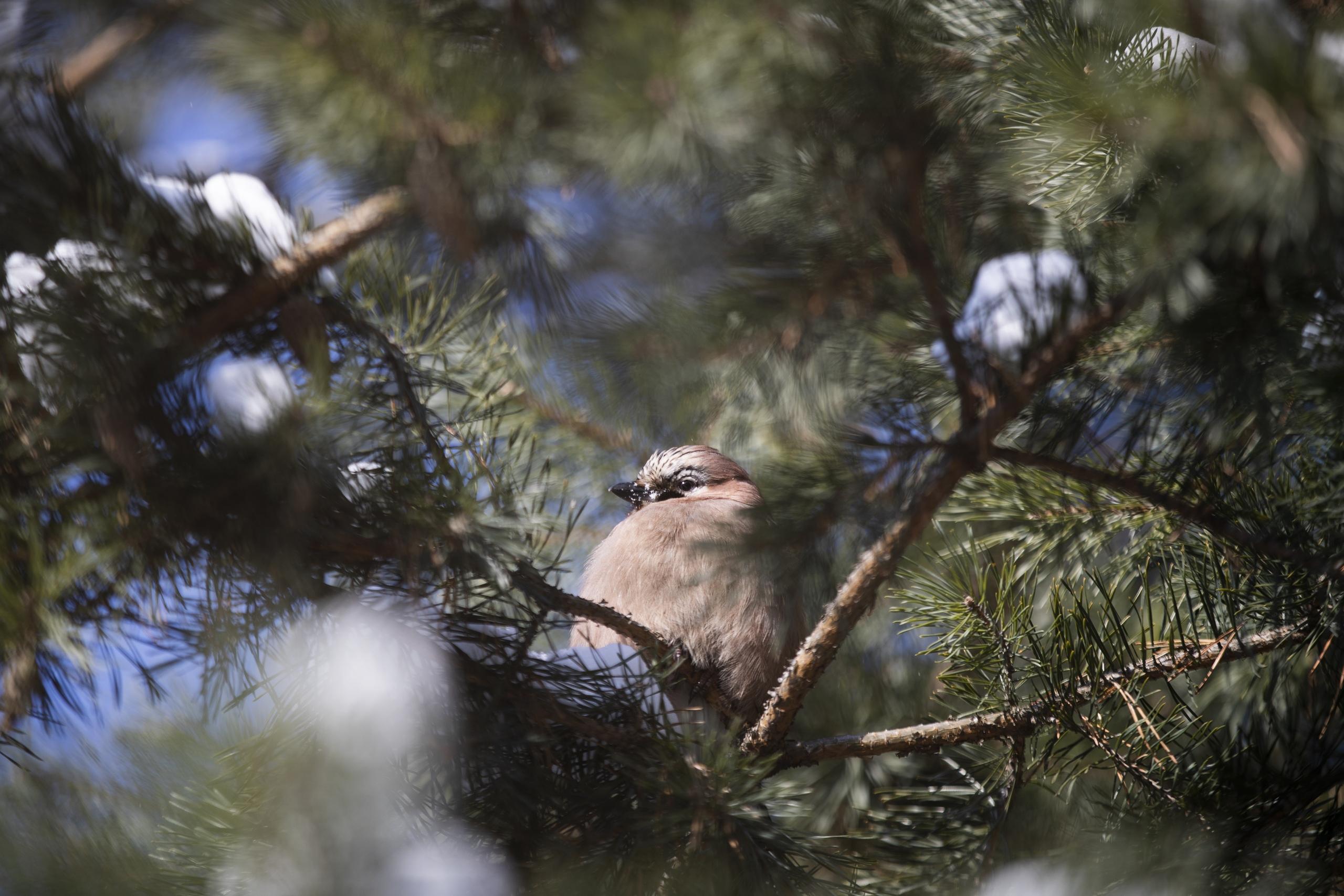 Птицы в Царицыне: москвичам рассказали об обитателях парка