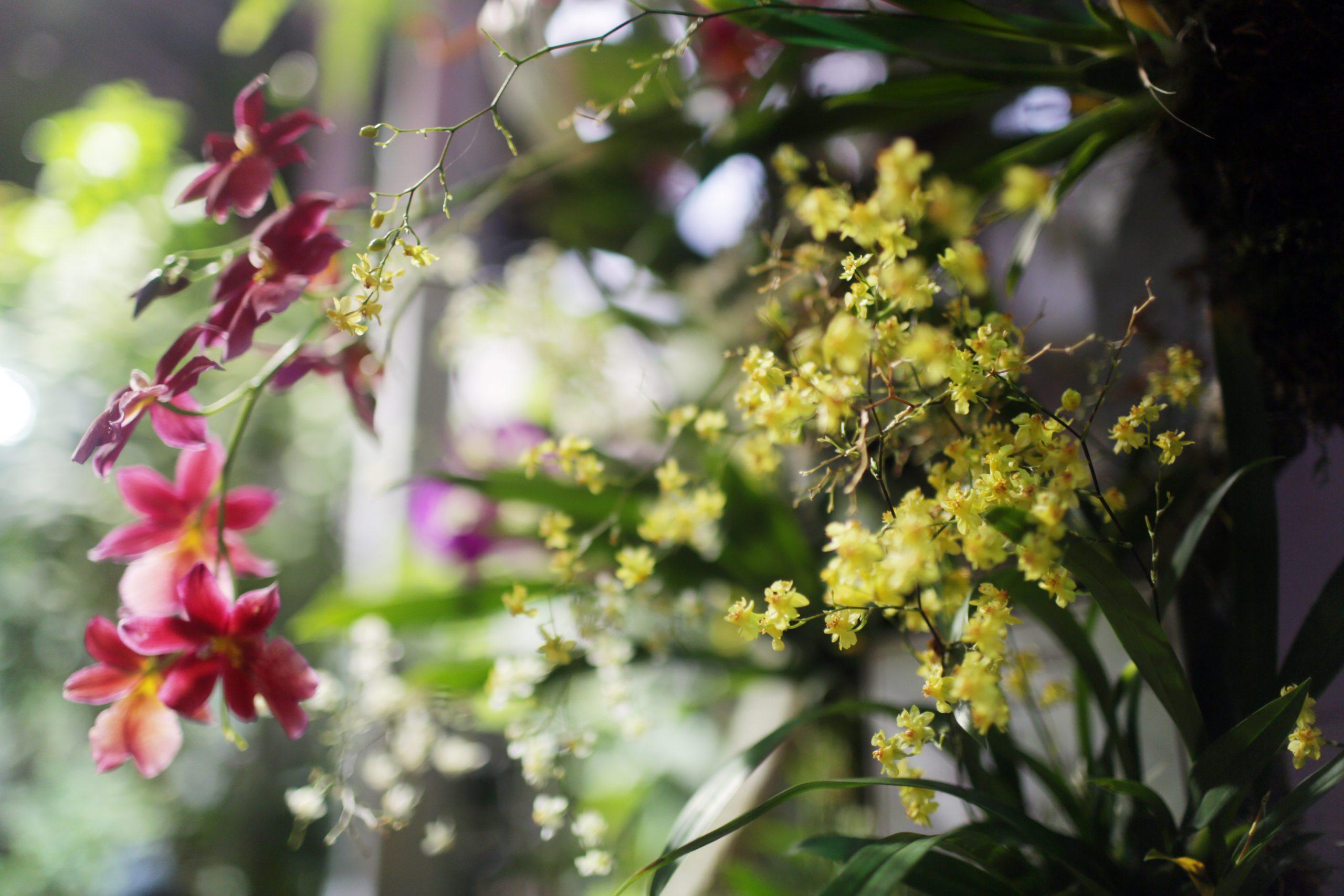 Весна в Царицынских оранжереях: жителей юга пригласили на выставку