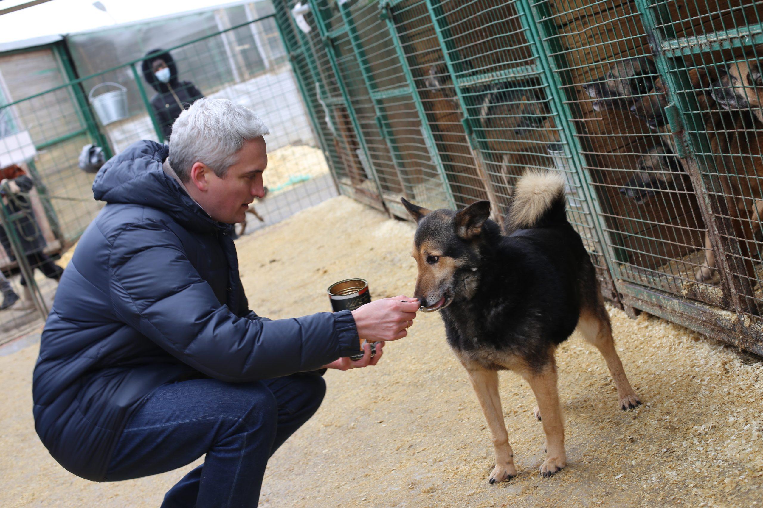 Бирюлевскому приюту для животных подарили 100 кг корма на день рождения