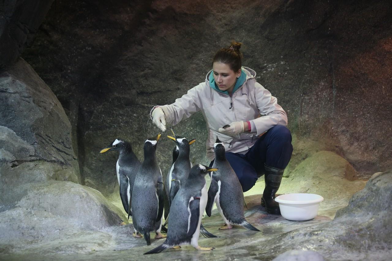 Папуанские пингвины начали строить гнезда в зоопарке Москвы