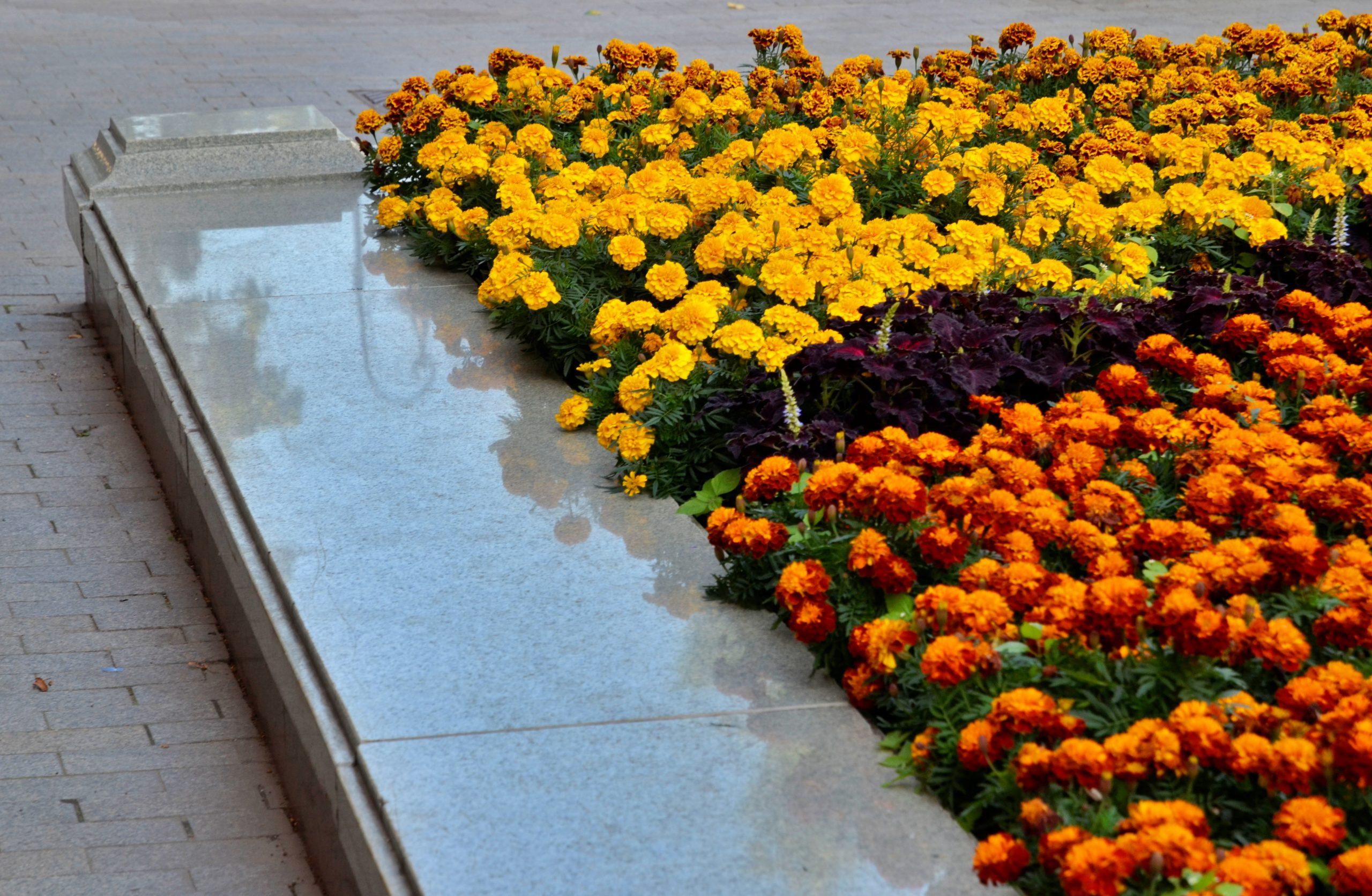 Около 54 миллионов цветов украсят скверы и парки столицы в этом году