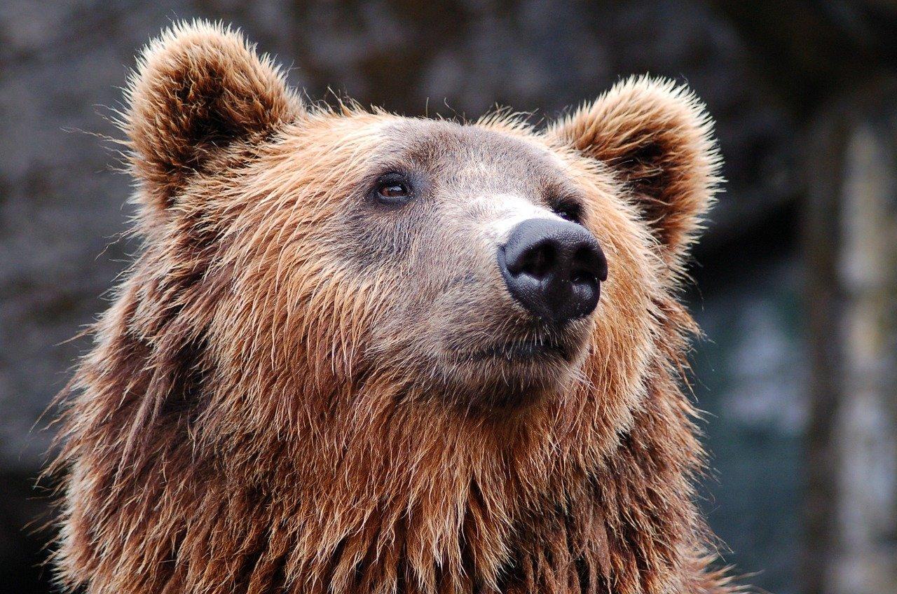 Медведи Московского зоопарка вышли из спячки