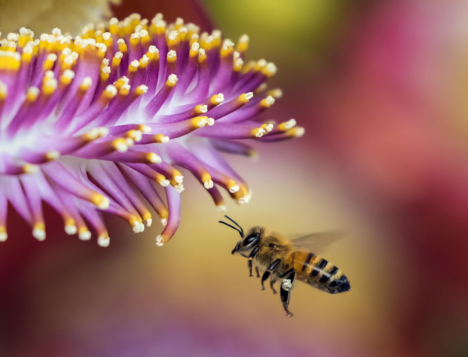Домики для насекомых появятся в Зябликовском и Аннинском лесопарках