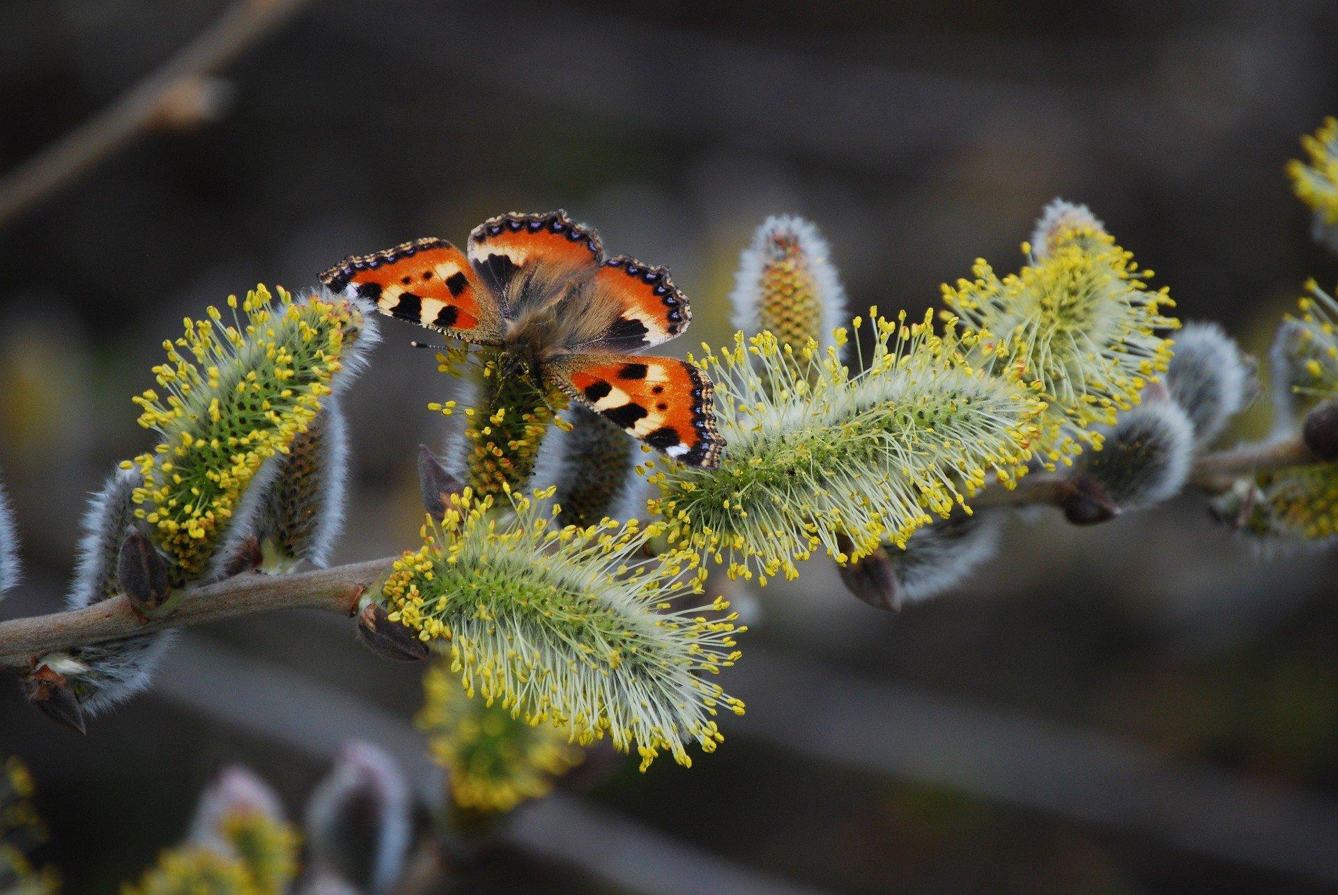 Бабочки и божьи коровки появились в столичных парках