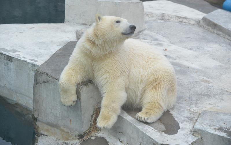 Московский зоопарк предложил выбрать имя для белого медвежонка