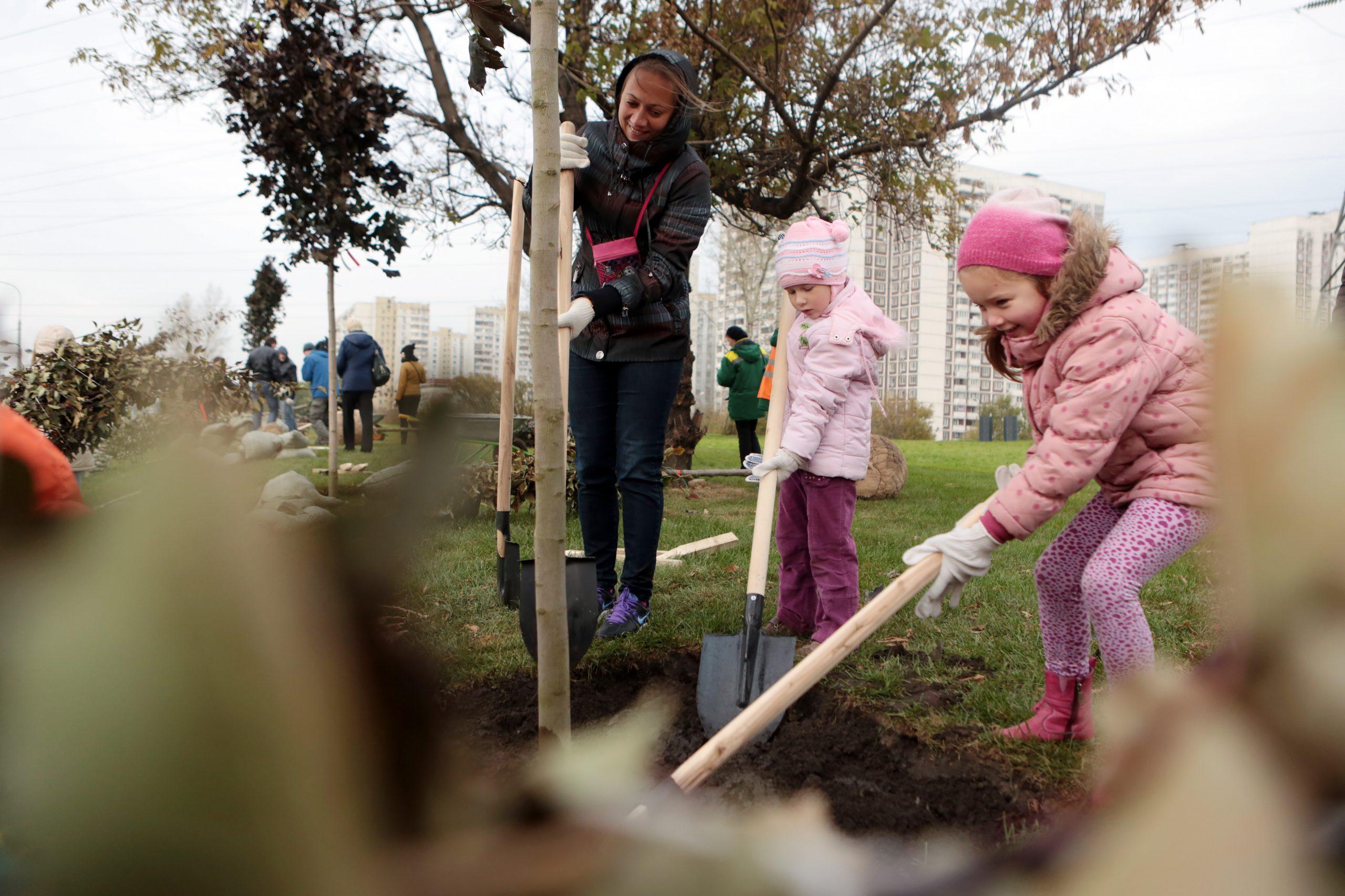 Наше дерево: жители Южного округа присоединятся к проекту