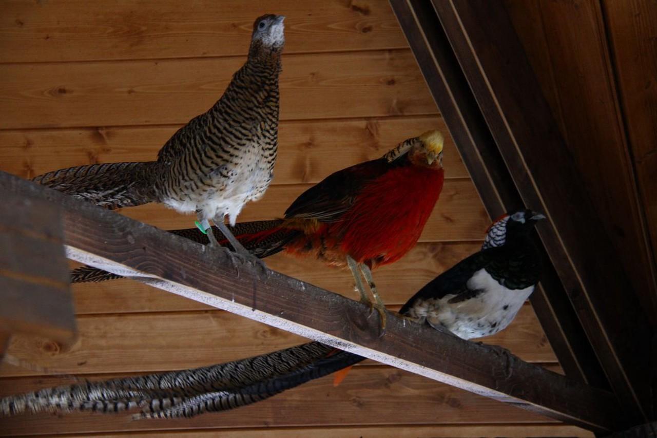 Филины и фазаны вернутся в вольеры природных парков Москвы