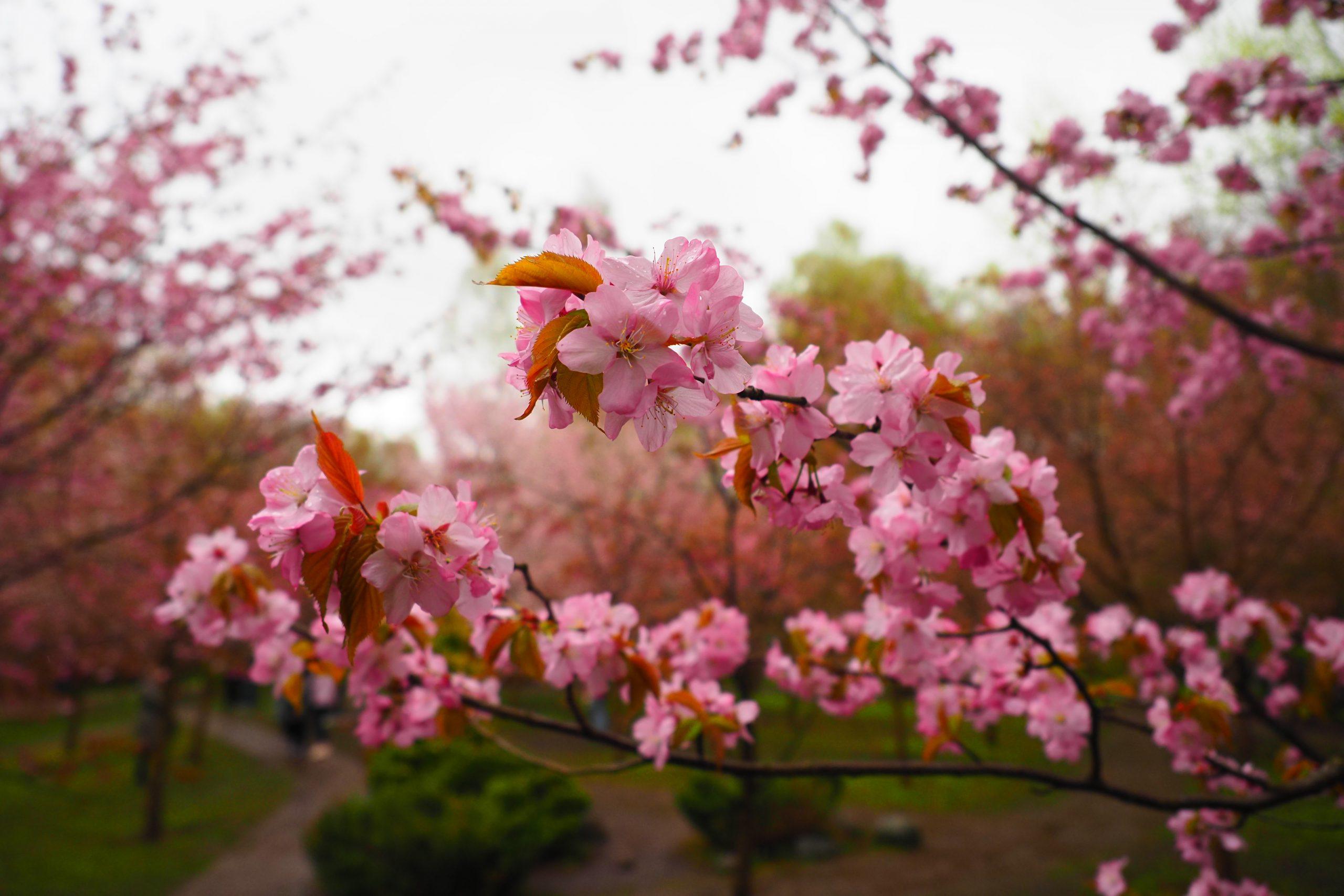 Фотофакт: мгновение весны