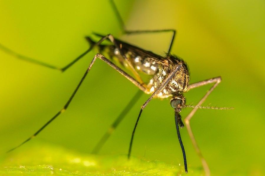 Специалист поделился информацией о количестве комаров летом в этом году