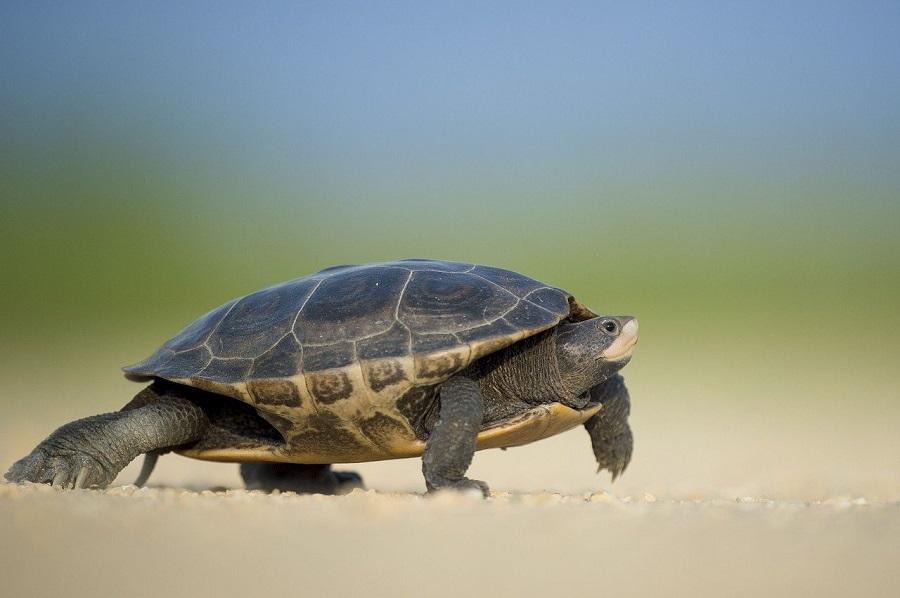 Всемирный день морской черепахи отметили в экоцентре «Битцевский лес»