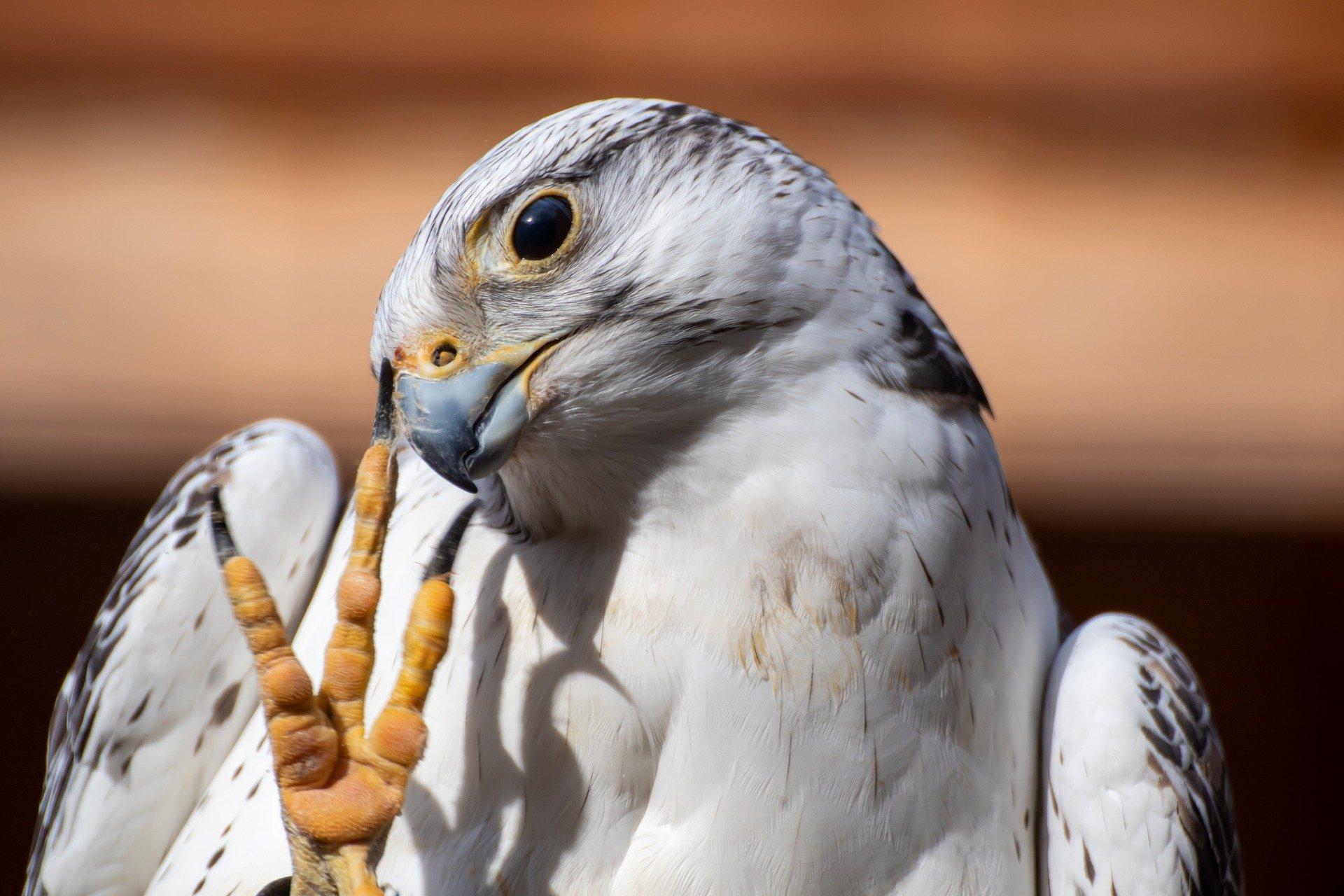 Птичья потеха: В «Коломенском» проведут виртуальную экскурсию
