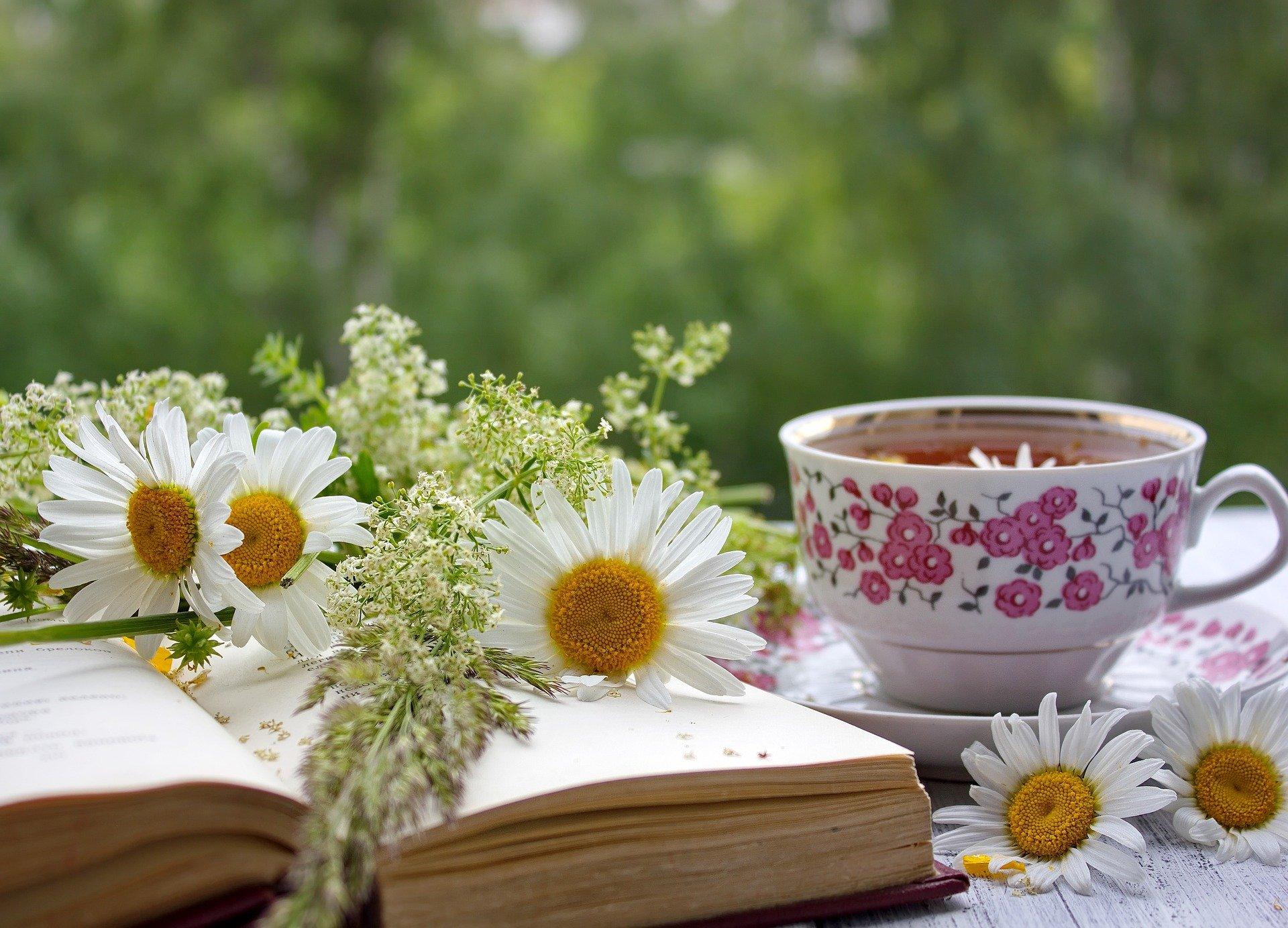 Библиотеки Южного округа столицы подготовили книги для летнего чтения