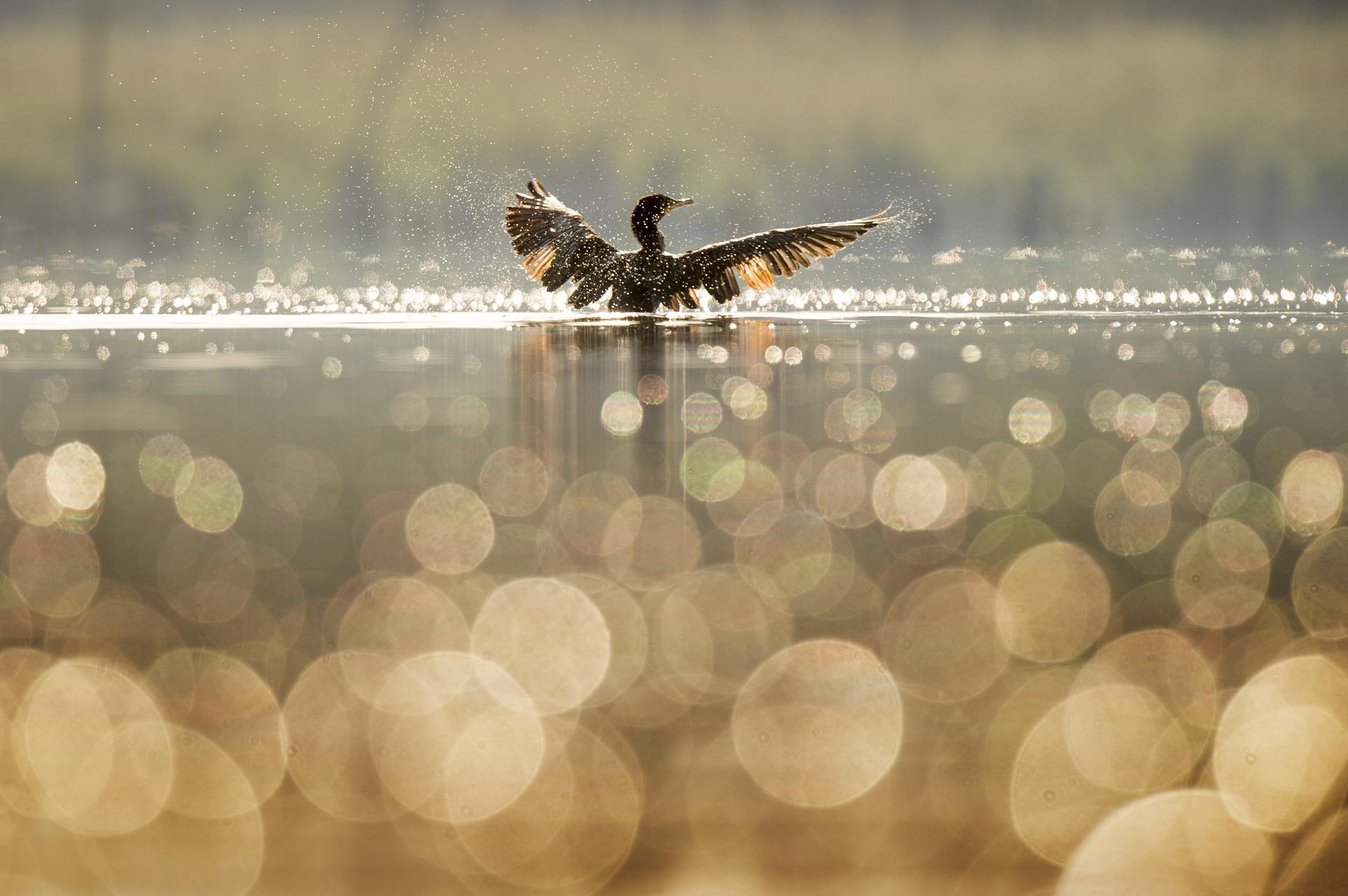 Необычных уток заметили на прудах природно-исторического парка «Царицыно»