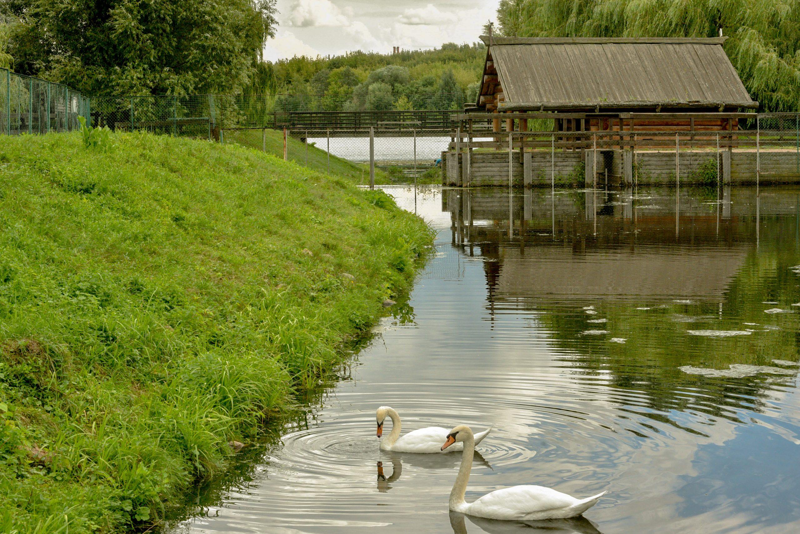 Плотину реки Жужа в «Коломенском» отремонтируют