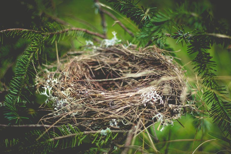 Птенцы родились у краснокнижных пернатых на зеленых территориях Южного округа столицы