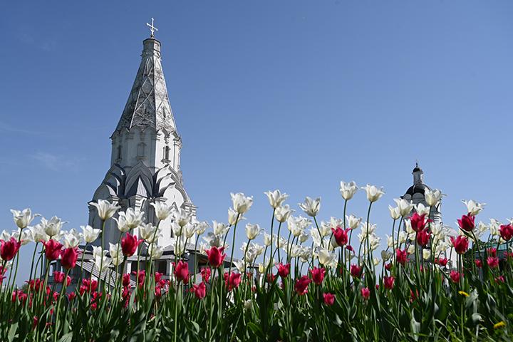 Интерактивную экскурсию о царски садах и виноградниках проведут в «Коломенском»