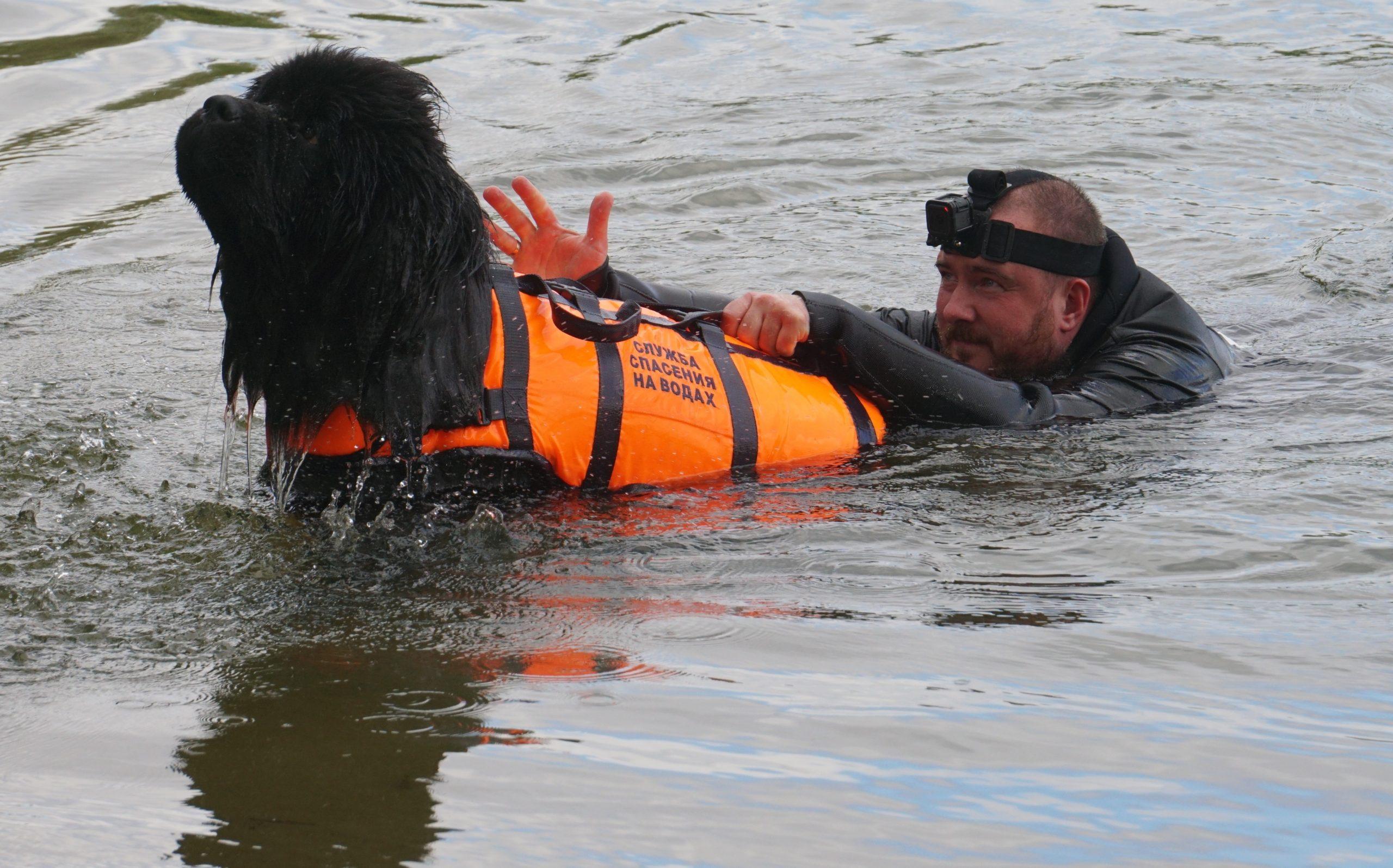 Только добрых собак берут в водолазы