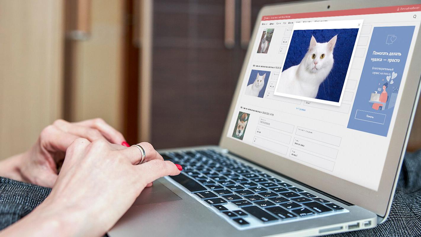 Жителям Москвы рассказали о работе сервиса по нахождению потерявшихся домашних животных