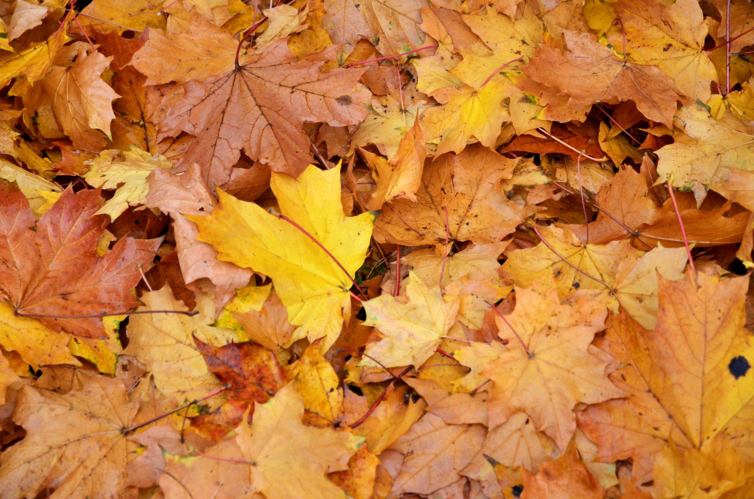 Листья с улиц города убирают четыре раза в сутки. Фото: Анна Быкова